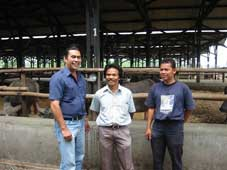 (left to right) Dr. Petrus Sitepu (Austral Livex), Feedlot Manager Suratno and Assistant Manager Rahmad Suryono discussing the buffalo trials at the Kariyana Feedlot near Bogor, West Java Indonesia